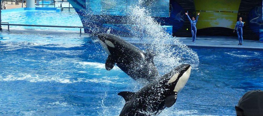 Piden acabar con los espectáculos de delfines en los parques de SeaWorld