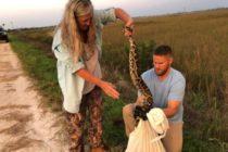Cazadores luchan contra las serpientes invasoras en Florida