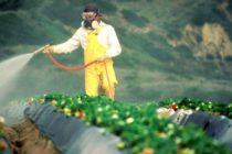 Júpiter podría unirse a Miami y Cayo Hueso para prohibir uso del herbicida Roundup
