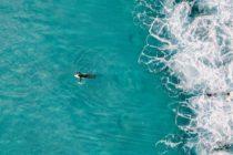 Alerta de un dron le evita a surfista encuentro con un tiburón