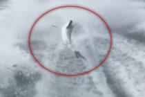 Hombres disparan y maltratan terriblemente a un tiburón (Video)