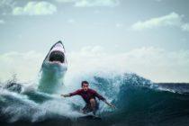 Surfista de 13 años fue atacado por un tiburón en playa de Florida