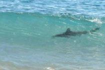 Tiburón mordió a adolescente mientras surfeaba en New Smyrna Beach