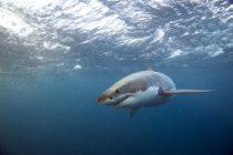 ¡Momentos de terror! Nadadora se llevó el susto de su vida al nadar con un tiburón en Florida