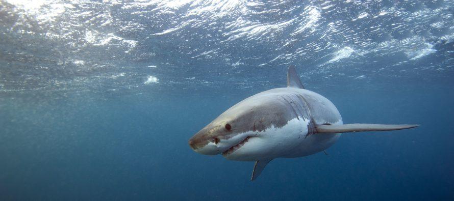 Hombre fue mordido por un tiburón en playa de Jacksonville