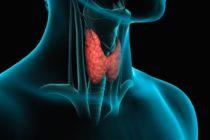 Dra. Aliza: La tiroides, una pequeña glándula con funciones muy importantes