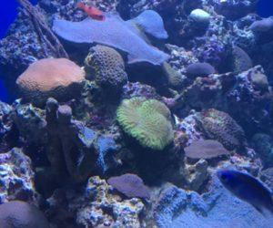 Emiratos Árabes Unidos conceden $3.5 millones para la restauración del arrecife de los Cayos de Florida