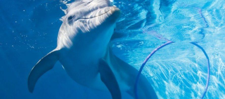 Estudiantes de Great Heights Academy con necesidades especiales  nadan con delfines