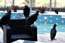 Familia en West Palm Beach es asediada por buitres