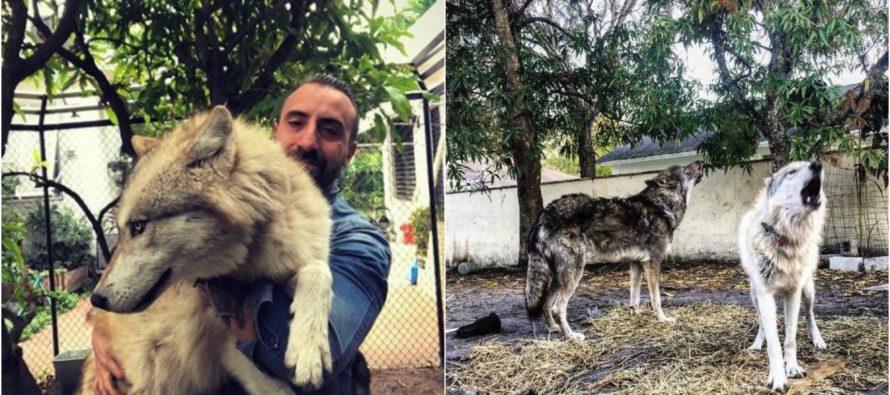 Perros lobo atacan a otras mascotas en Miami Beach y alerta a sus residentes
