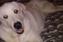 Zero, el perro que dio su vida para salvar a sus dueños de un tiroteo