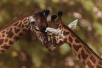 950 animales del zoológico de Florida preparados para Dorian